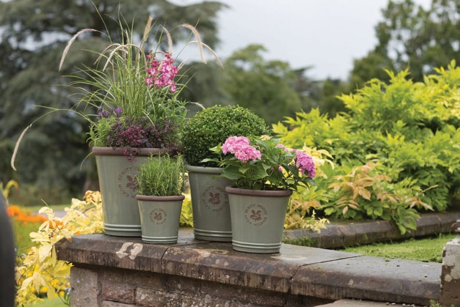 Container Gardening: An Ultimate Guide