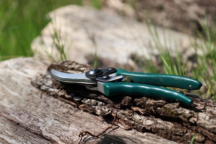 Green Garden Scissors