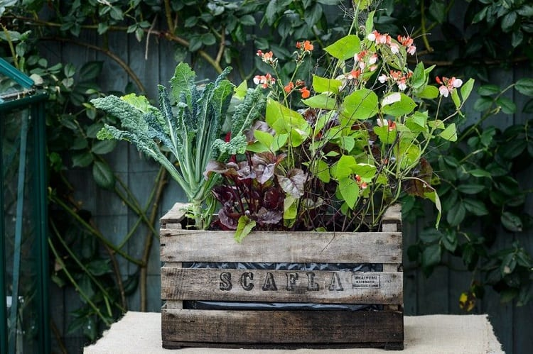 Up-Cycled Plant Container