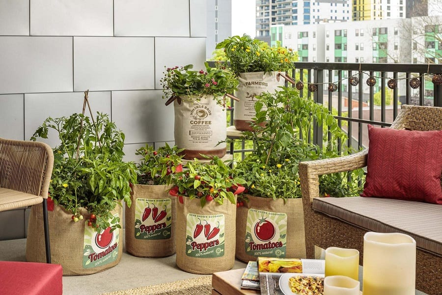12 Vegetables That You Can Grow On Your Balcony