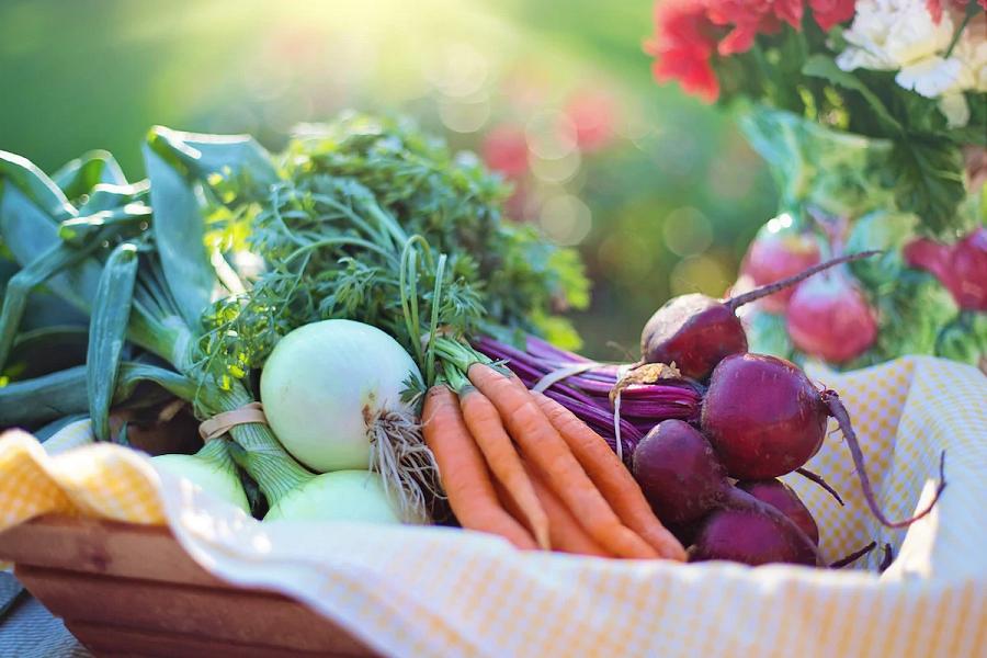 16 Best Winter Crops For Your Garden