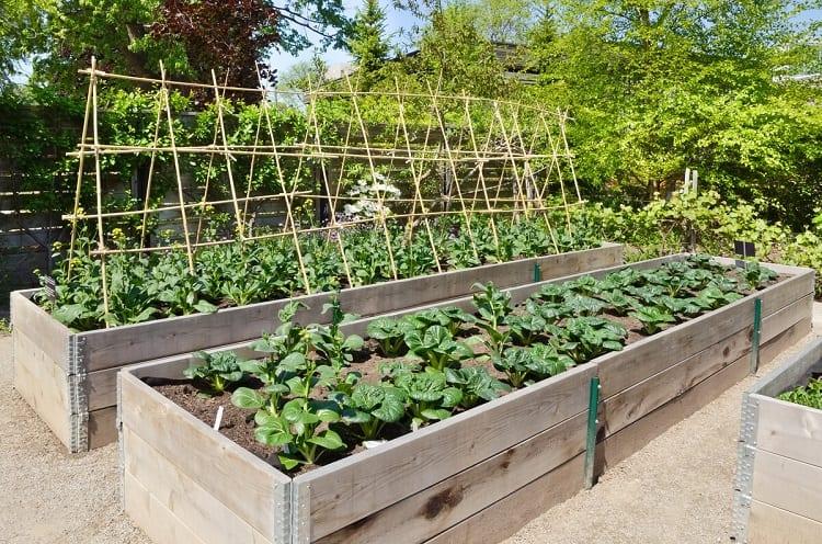 Garden Plot Planning