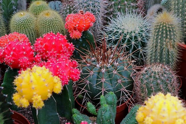 Understanding Cacti