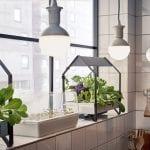 Hydroponics vs. Soil for Indoor Gardens