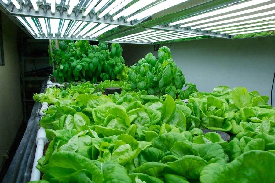 Best Grow Lights For Your Urban Garden