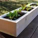 DIY Planter Box: How to Build Them