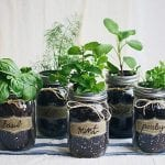 10 Great Ideas for Your First Urban Garden