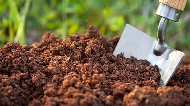 What Are The Different Types Of Potting Soils?
