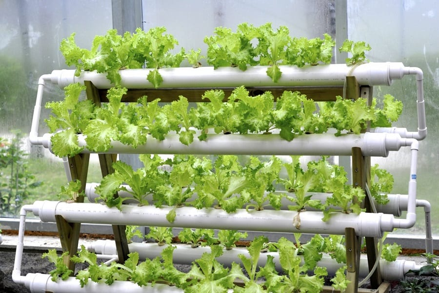 DIY Hydroponics At Your Home