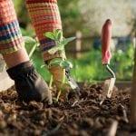 Best Potting Soil for Your Urban Garden