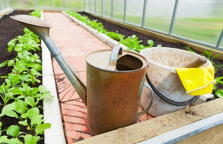 ready to watering garden with watering can