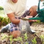 How Often Should You Water Your Garden?