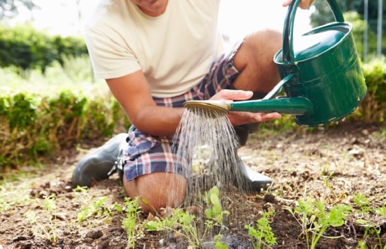 man watering his garden