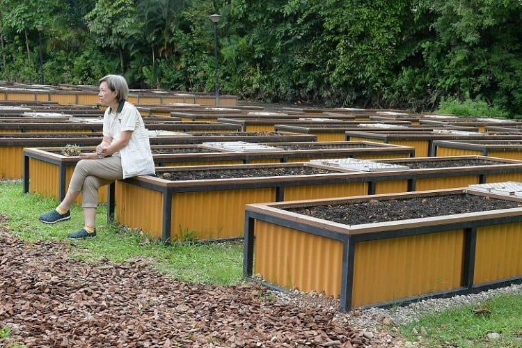 Marking Outline Of Your Garden Plot