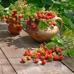 Best Strawberry Planters for 2021