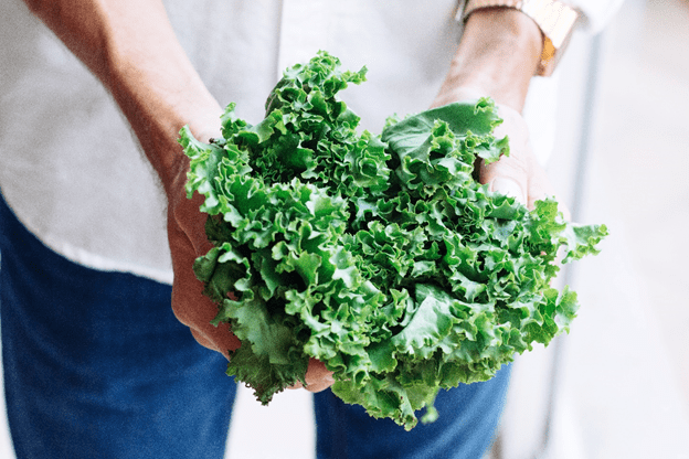 Your Guide to Growing Kale Indoors 1