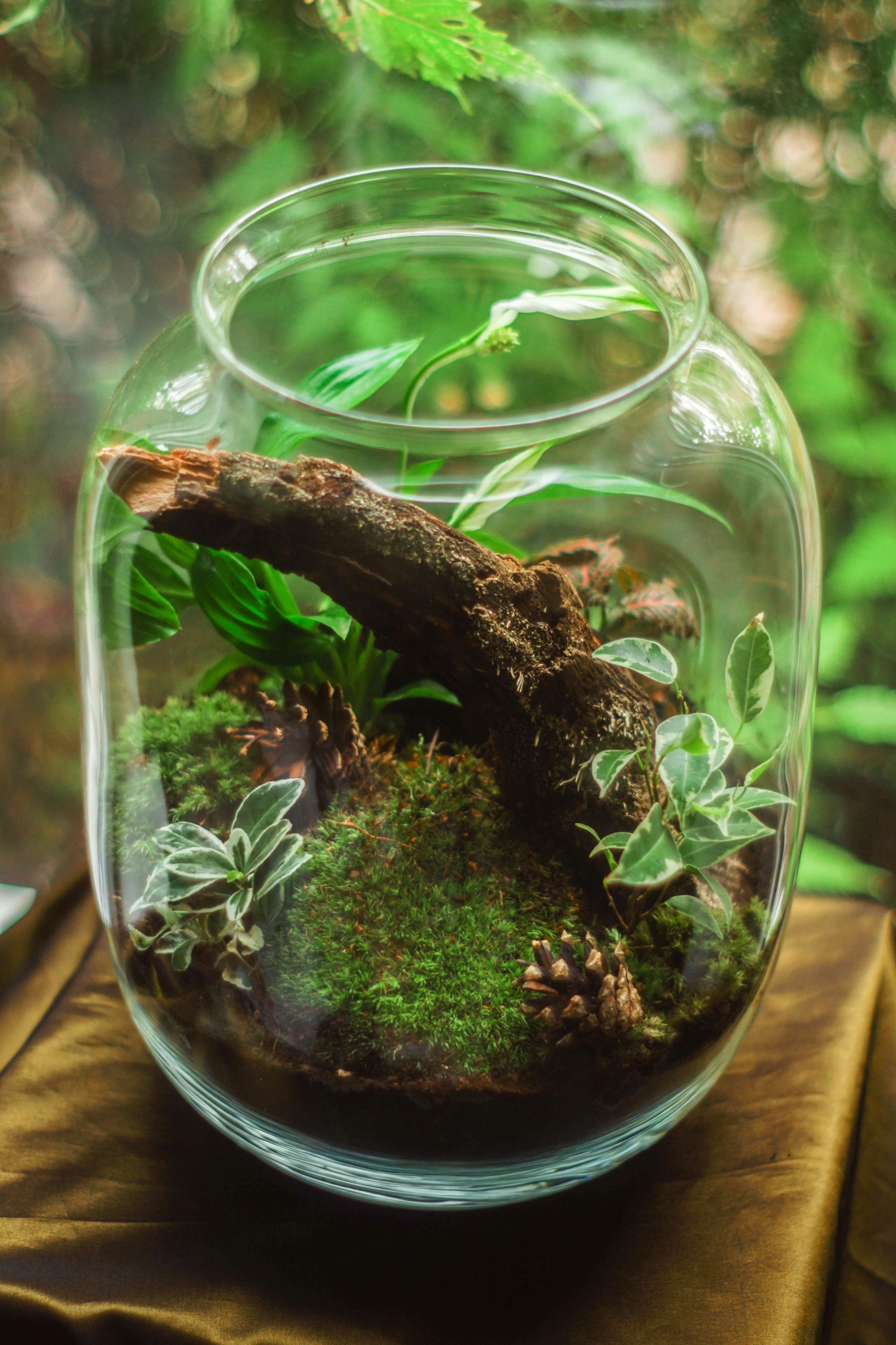 Plants for fairy gardens in a clear glass jar