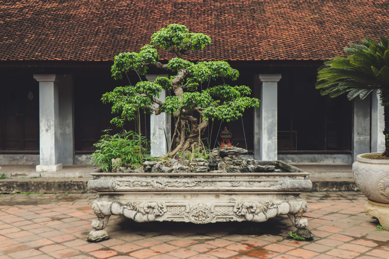 Bonsai for fairy gardens