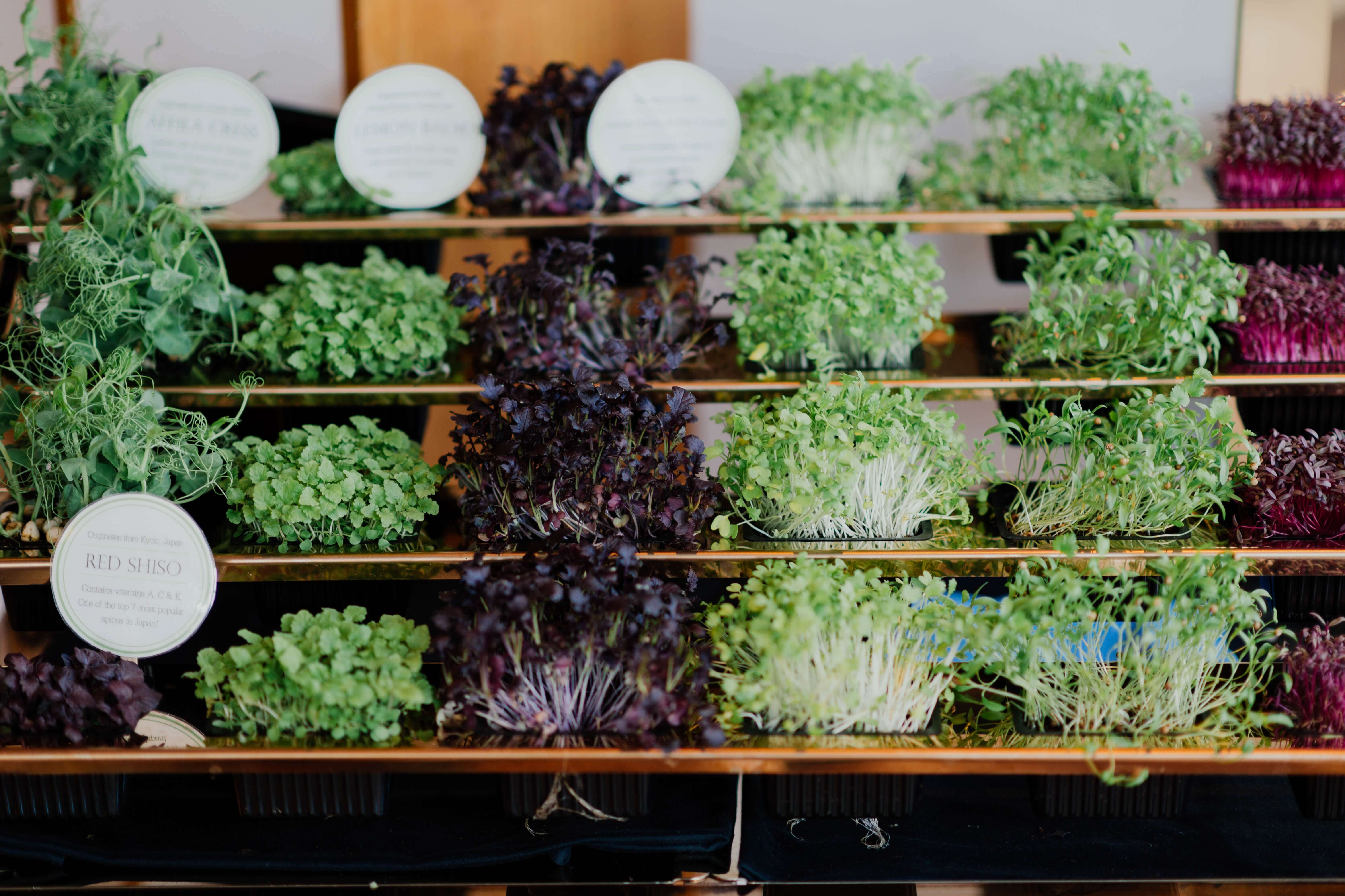 Broccoli Sprouts on a shelf