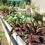 Your Square Foot Garden Planner - The Ultimate Guide