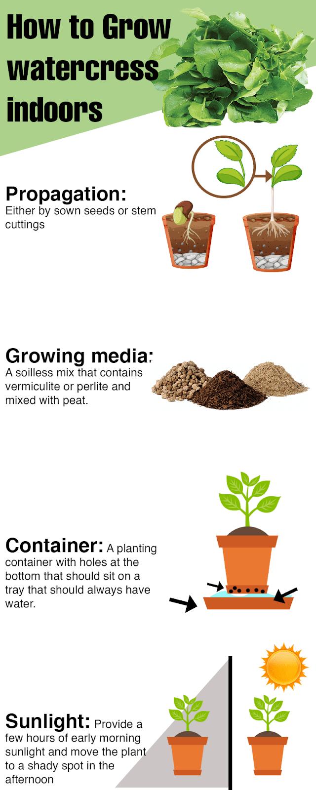 How To Grow watercress indoors