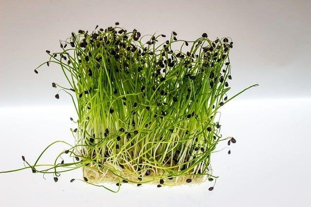 Green watercress
