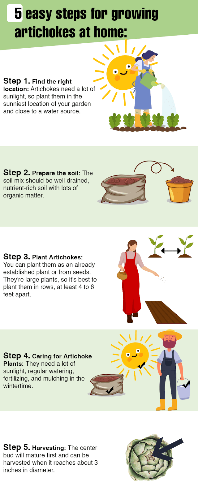 How To Grow Artichokes infographic