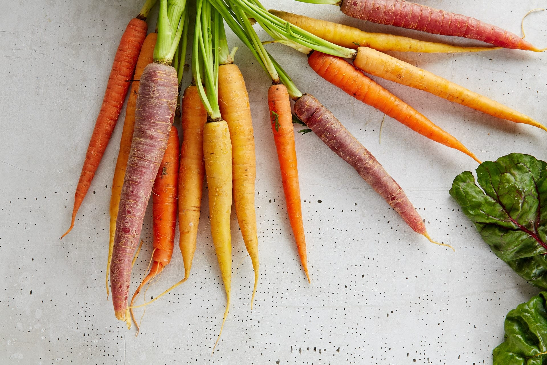 A bunch of different varieties of carrots