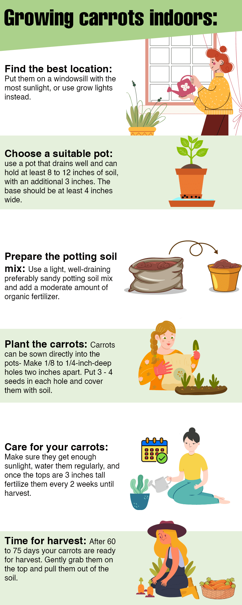 How to Grow Carrots Indoors infographic