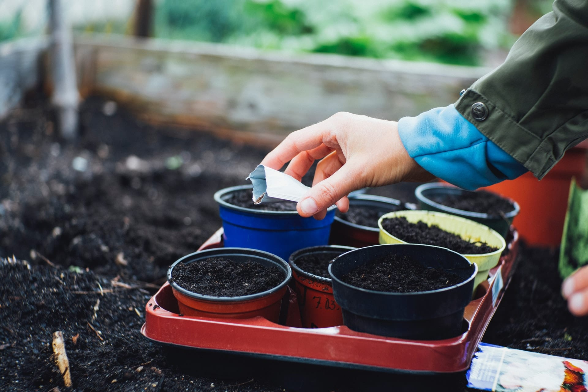 A person sowing seeds in small pots