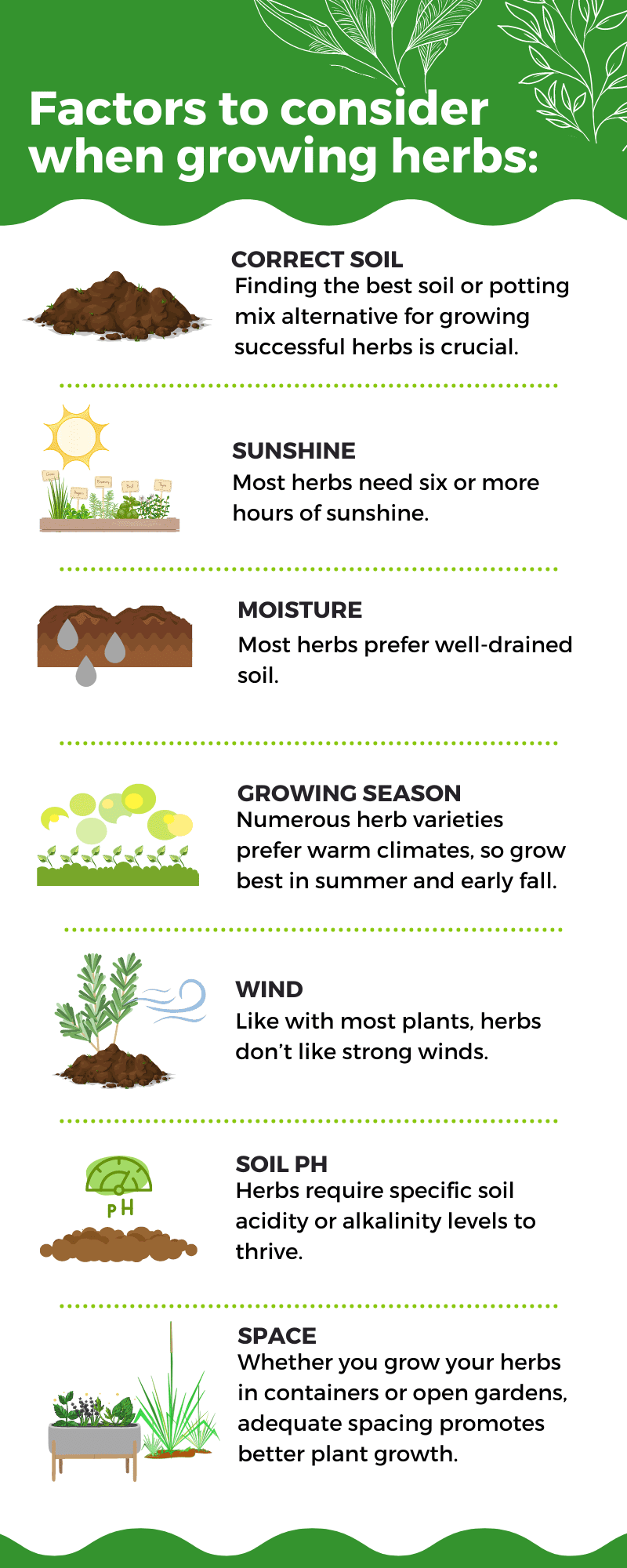 Best Soil for Herbs