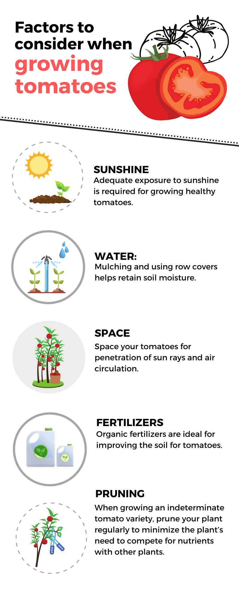 The Best Soil for Tomatoes infographic