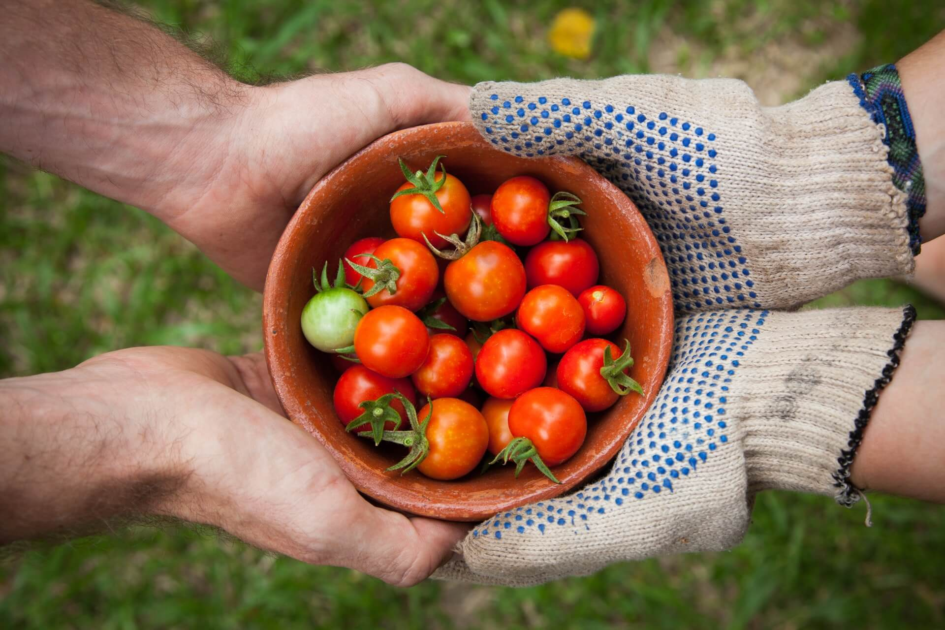 The Best Soil for Tomatoes