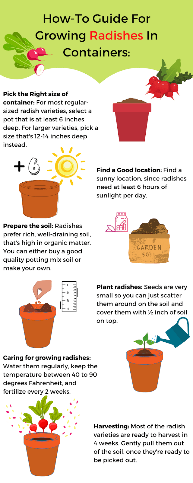 How-To Guide for Growing Radishes in Containers infographic