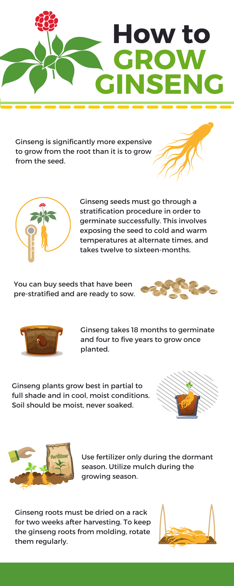 How to Grow Ginseng infographic