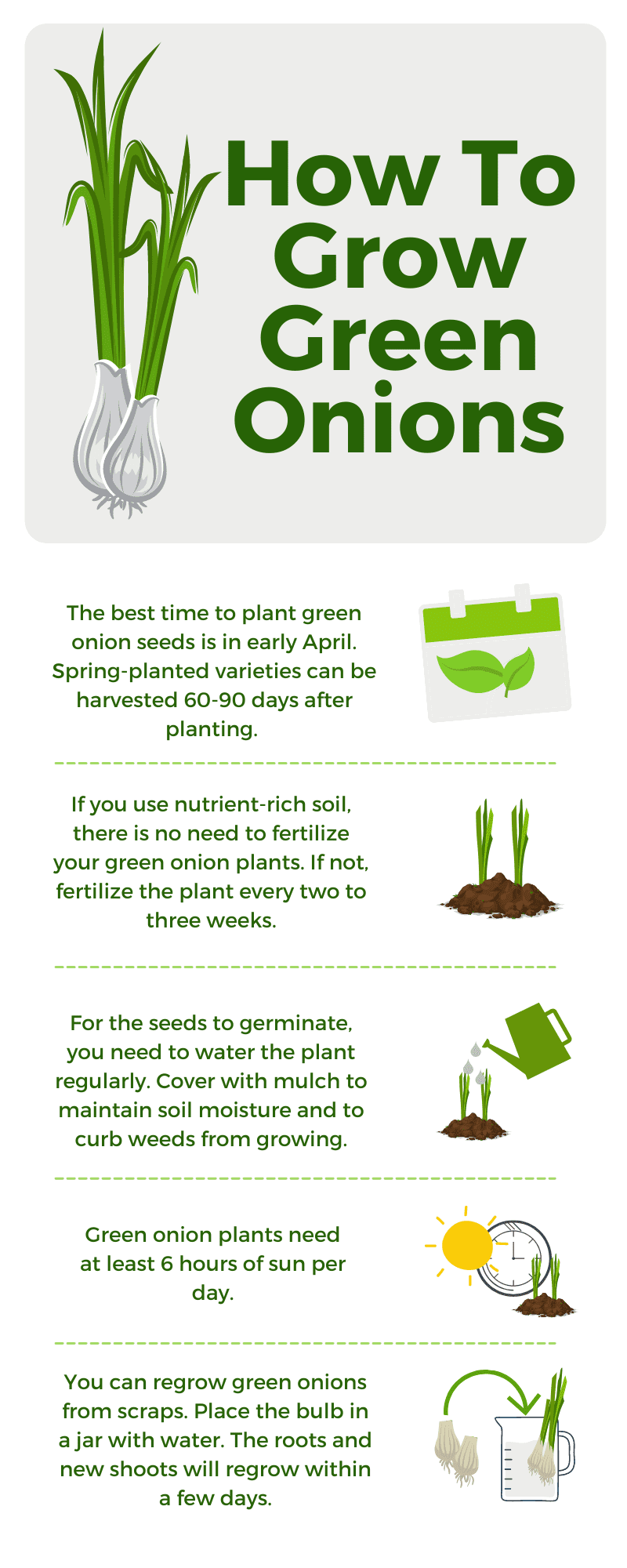 How To Grow Green Onions infographic
